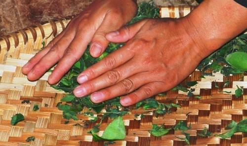 Lalani & Co: Jun Chiyabari Garden Tea Hand Rolling