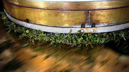 Lalani & Co: Jun Chiyabari Tea Garden Machine Rolling