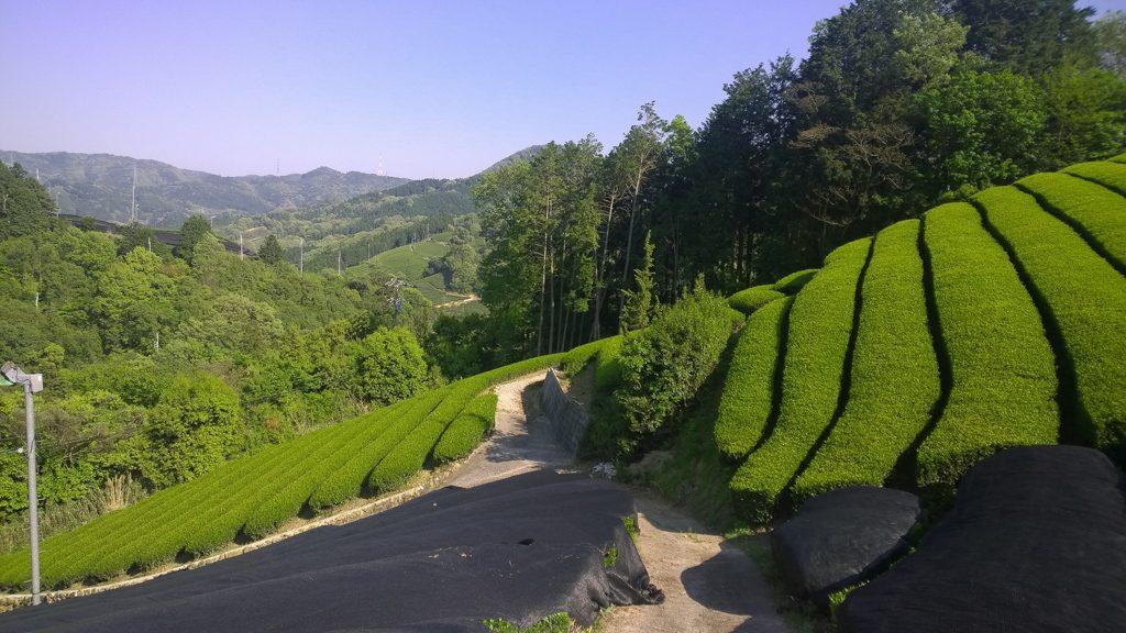 Lalani & Co: Japanese Kyoto Oolong Tea Garden